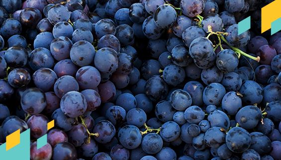 blog-582x322-mintos_grapes